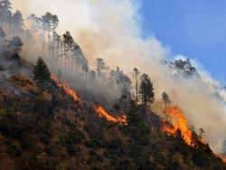 烟火识别系统在森林火灾的应用